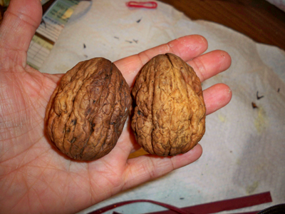 Sexy Pictures (Sex Puns) - Page 4 2walnuts