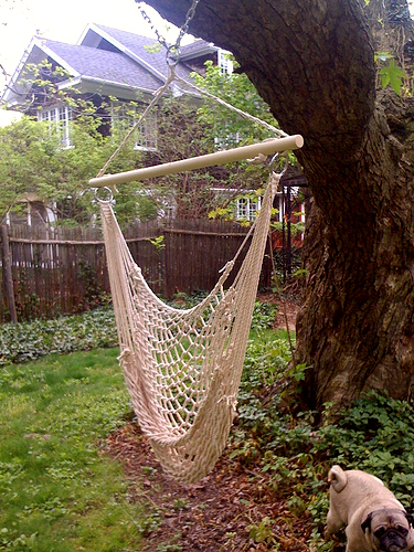 Last Year My Mom Got Me This Hammock Chair Swing, But I Didnu0027t Have  Anywhere To Hang It. Until Now. The Giant Tree In The Back Is Just The  Right Size.