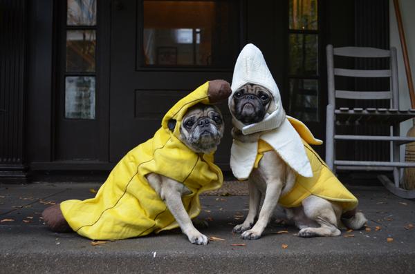 Bananas on Halloween & ljcfyi: Bananas on Halloween