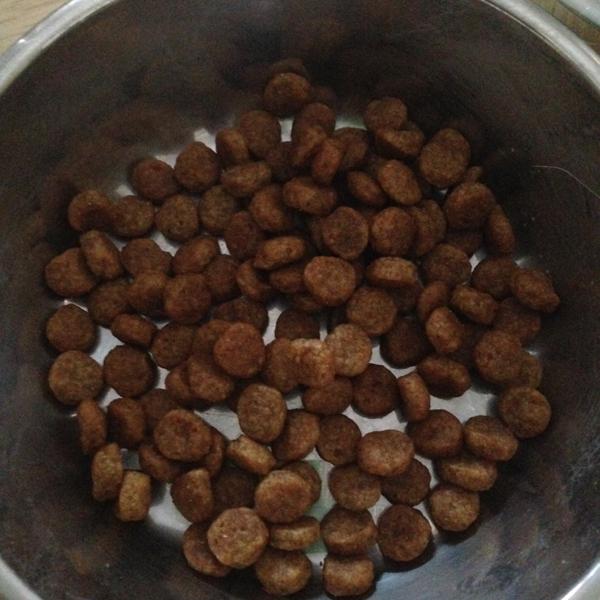 Hills Kd Cat Food Petsmart